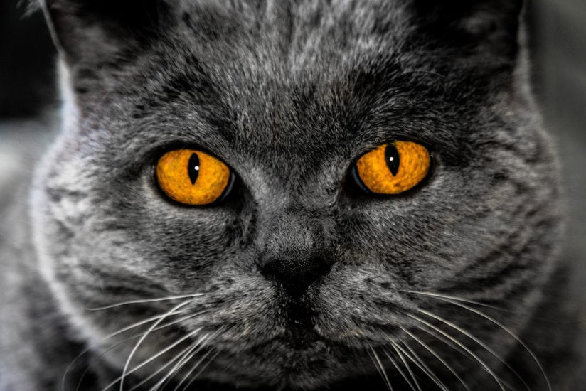 Interesting Facts About Cat Eyes Myawesomecat