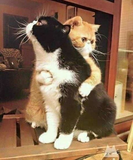 Considerations When Getting a Second Cat | Myawesomecat com